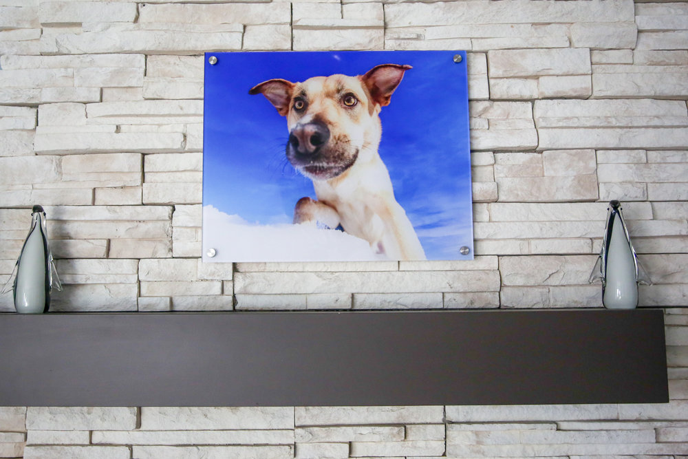Modern Acrylic of a cattle dog in the snow.jpg