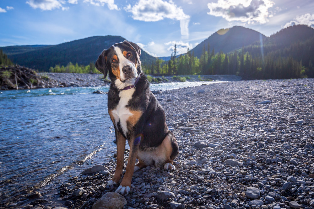 The-dog-with-a-bow-photography-calgary-cochrane.jpg