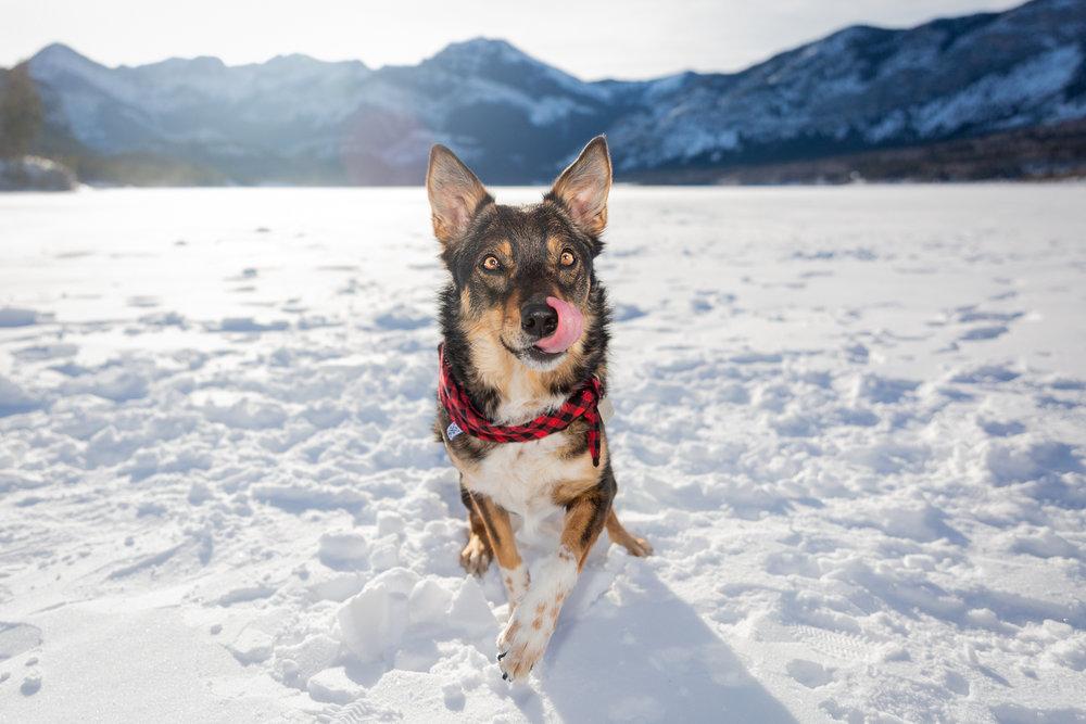 The-dog-with-a-bow-photography-calgary-cochrane-18.jpg