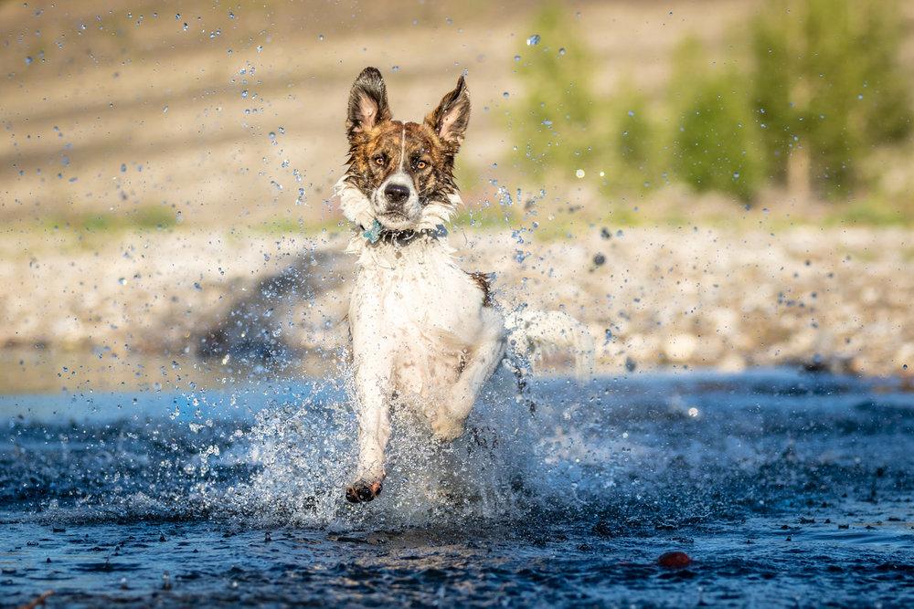 The-dog-with-a-bow-photography-calgary-cochrane-14.jpg
