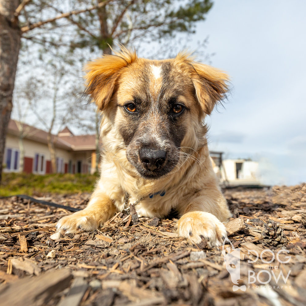 The-dog-with-a-bow-photography-calgary-cochrane-36.jpg