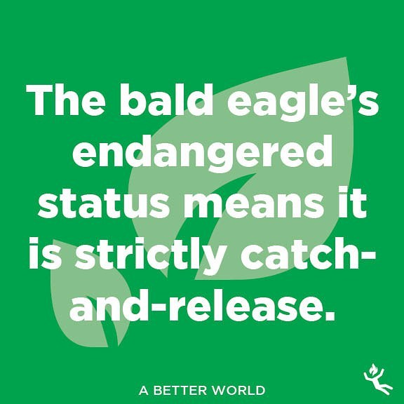 : a better world.  #saveearth #earthday #nature #world #earth #green #greenpeace #outdoors #naturelover #bald #eagle #america #patriot #hunt #hunting #fishing #catchandrelease #endangered #endangeredspecies #rules #birdwatching #roost #hide #talons #quotes #advice #wisdom #funnymemes #tips