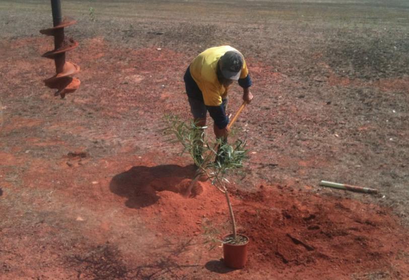gapuwiyak+plants+1.png