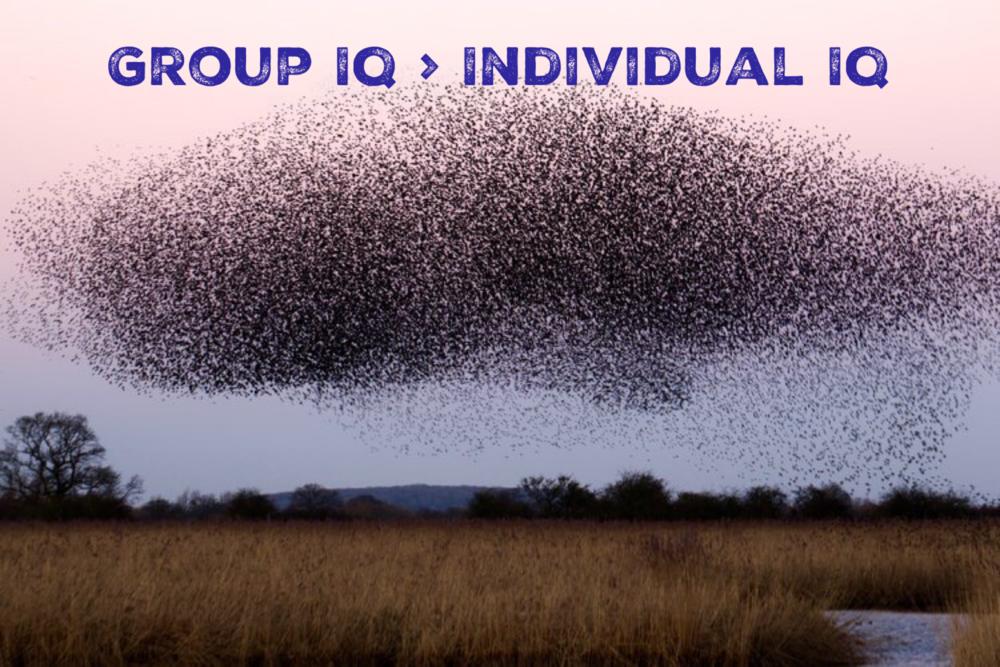 Group IQ > Individual IQ