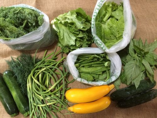 This picture is courtesy of my CSA company, and shows a full share (I only get a medium, so this is a bit more than I get). SO. MANY. GREENS!