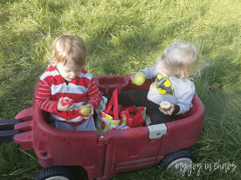 Apple picking is a must-do fall activity with the family