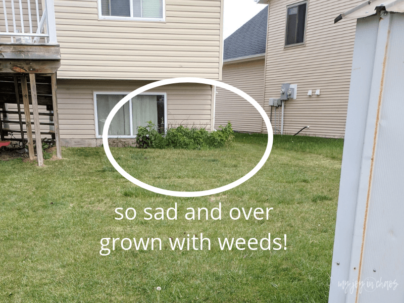 We need to remove the weeds from our lives if we expect to live abundantly as God intends.