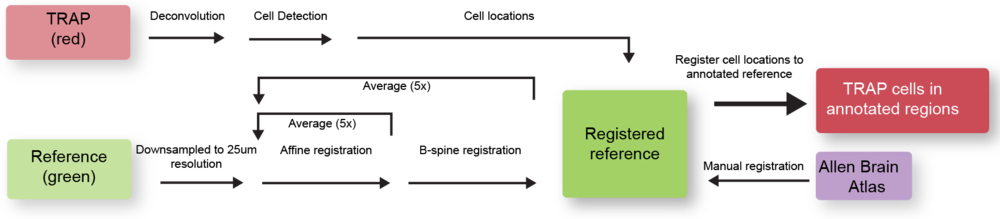 Data processing pipeline for image registration, cell detection, annotation and quantification