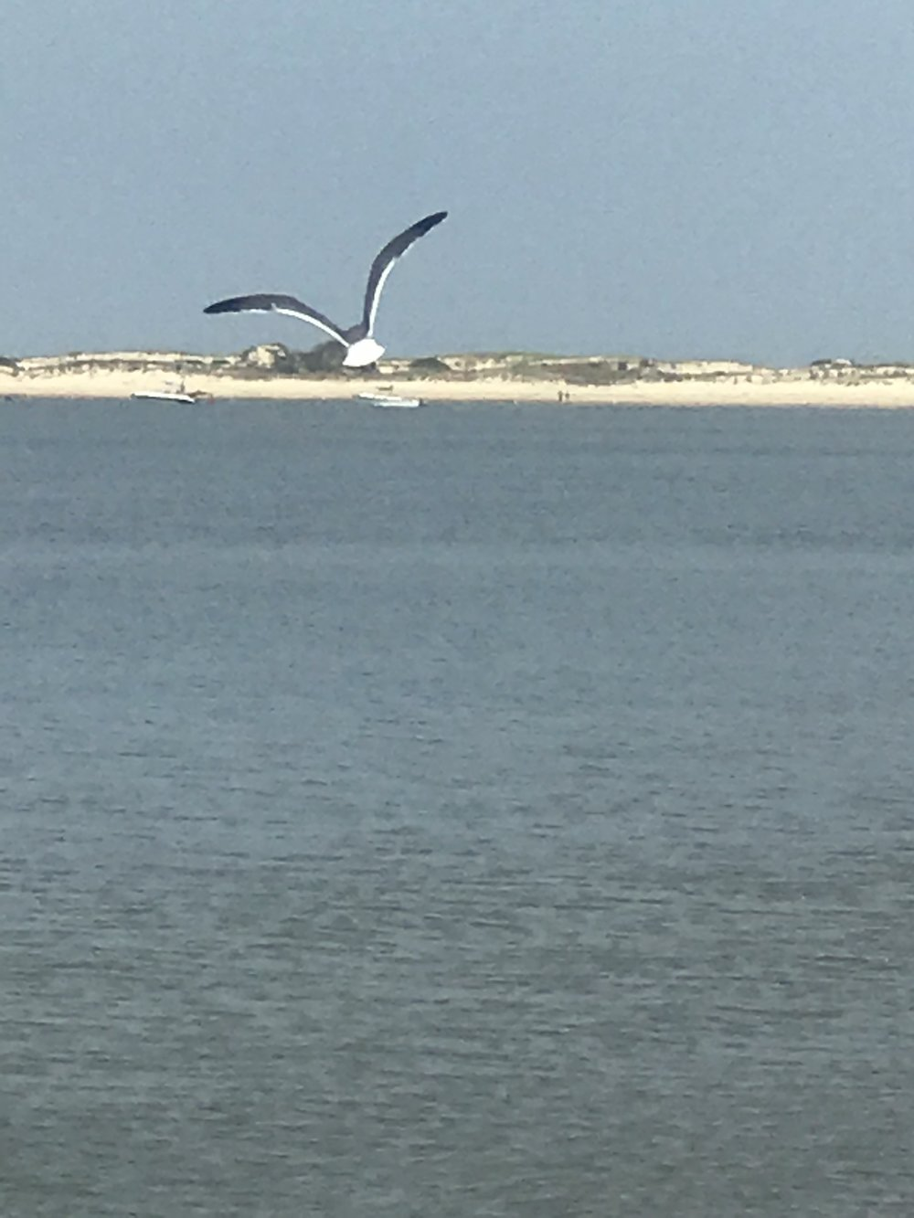 The freedom. This is from the Maryland Eastern Shore. Not sure if I took this pic, or our son Jayce.