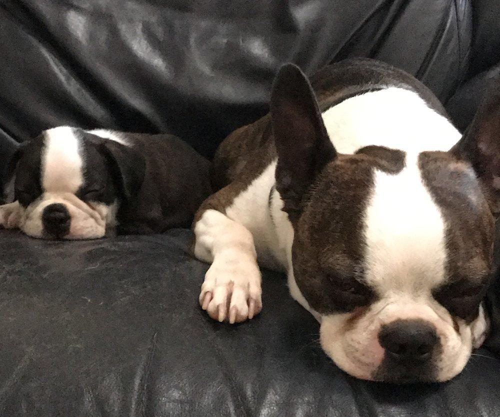 Sven & Sammy