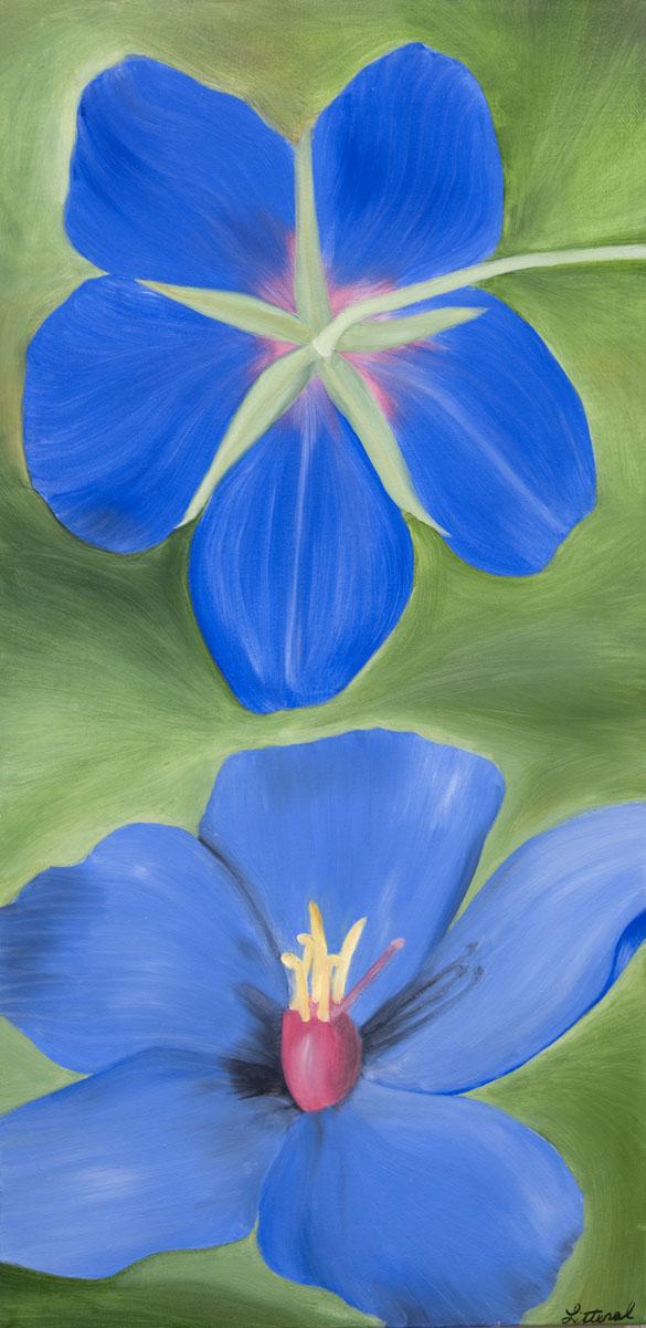 blue geranium.jpg