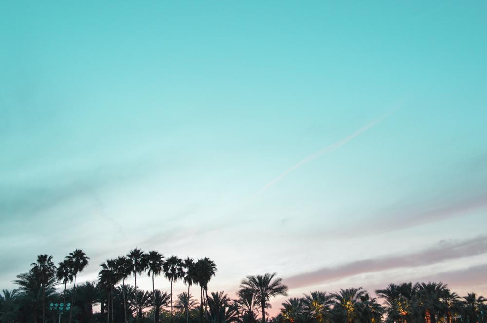 skypalms.jpg