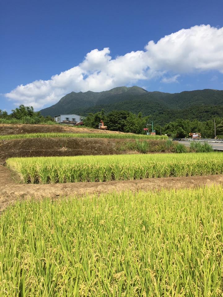 (照片取自「彩田友善農作」臉書)