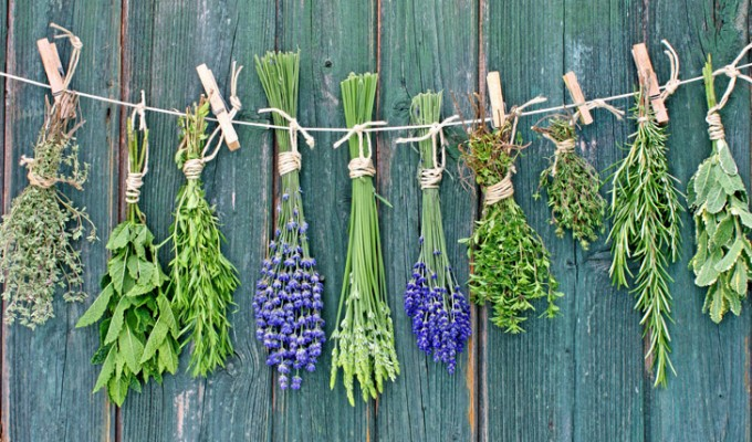 healing-herbs-to-grow-in-your-survival-garden-680x400.jpg