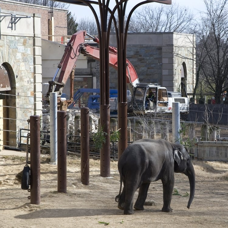 Elephant Community Center