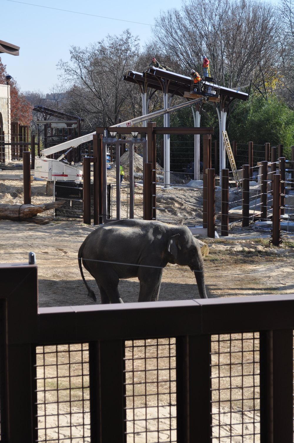 elephant community center.jpg