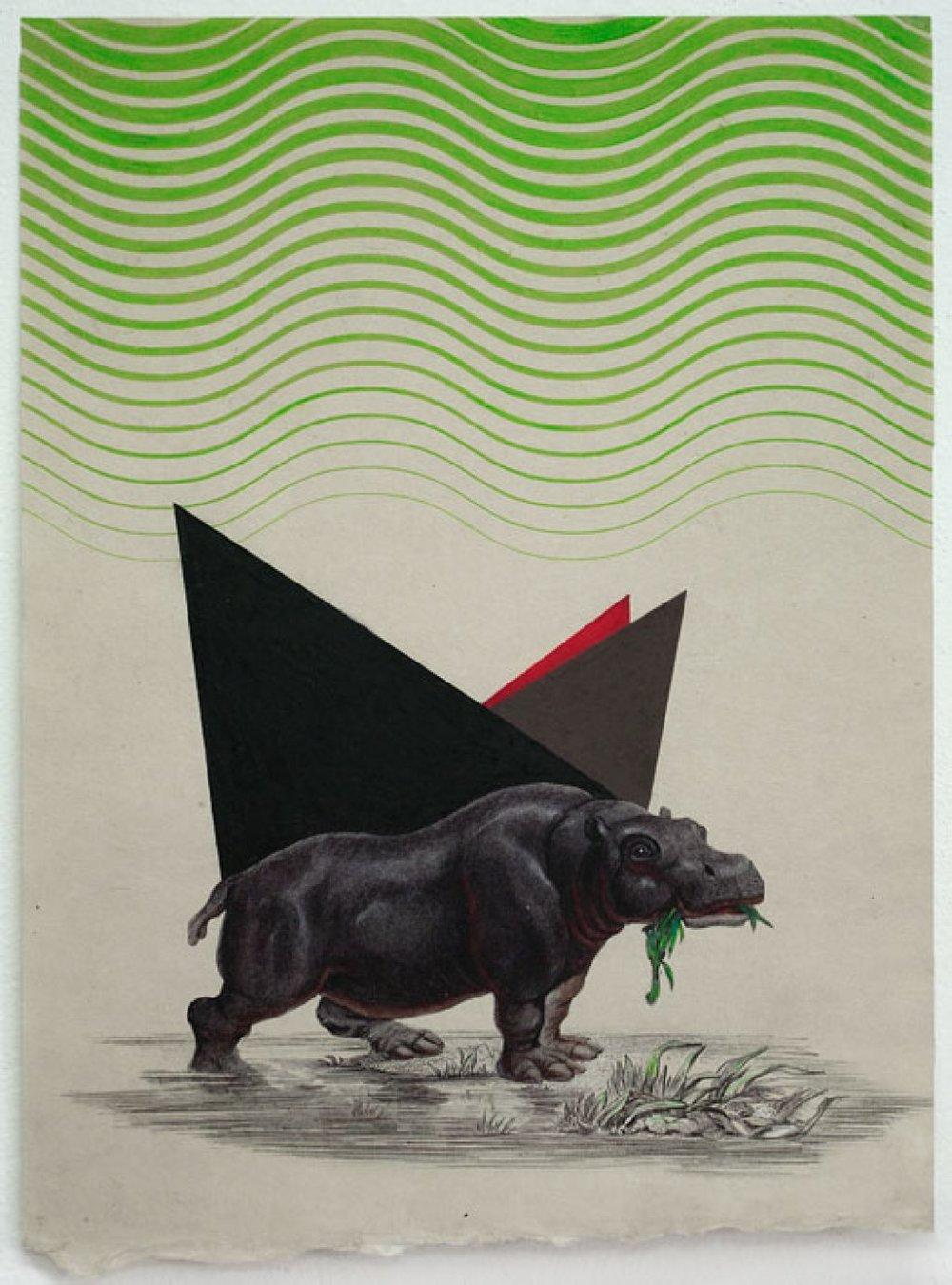 Hippo, 2011