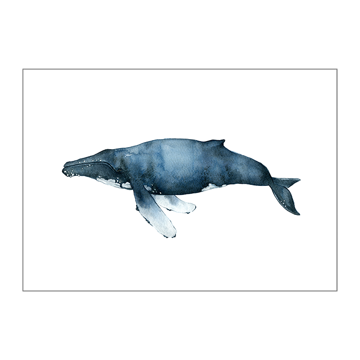 The Humpback Whale on paper