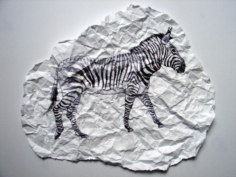 Crumpled Zebra