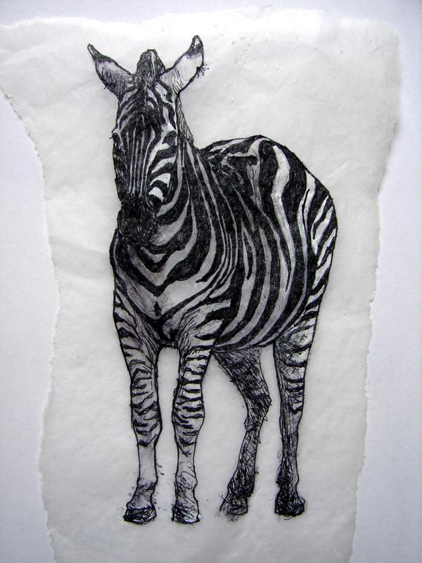 Zebra in Melbourne Zoo