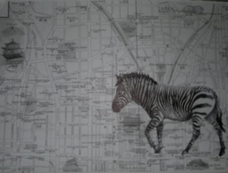 Zebra on Japanese Map