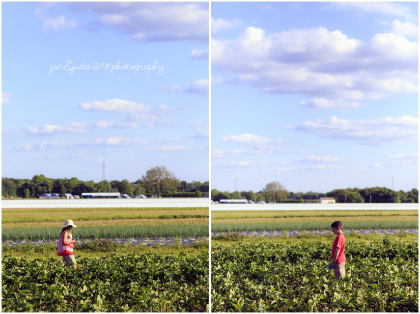 photo of strawberry picking by jacnjules nj family photographer