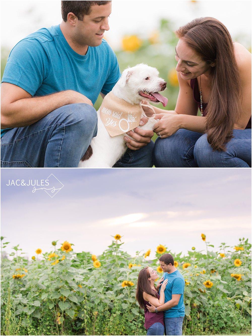 romantic engagement photos at johnsons locust hall farm in nj