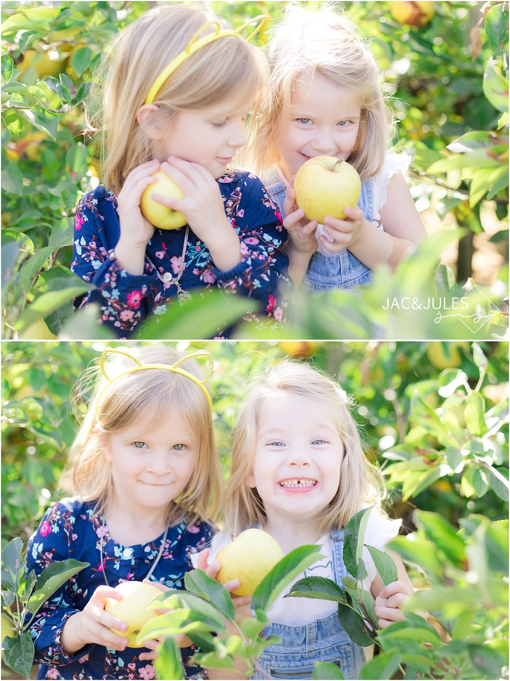 two girls apple picking at eastmont orchards in colts neck nj
