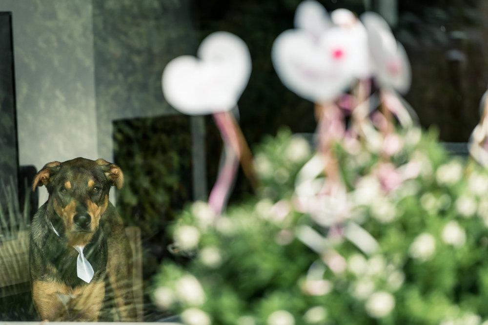 Cfoto-bruidsfotograaf-Brabant-Breda-013.jpg