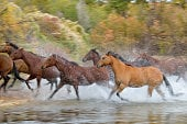 Horses: Getty Images