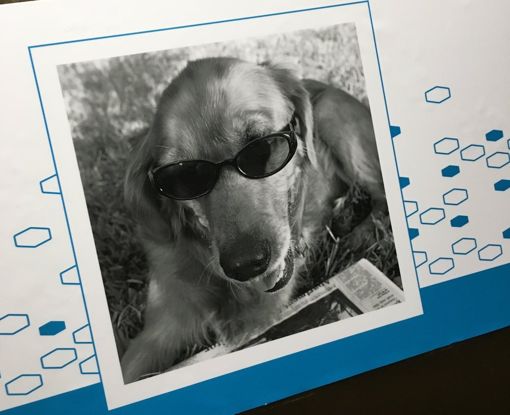 This is a dog with sunglasses reading a newspaper