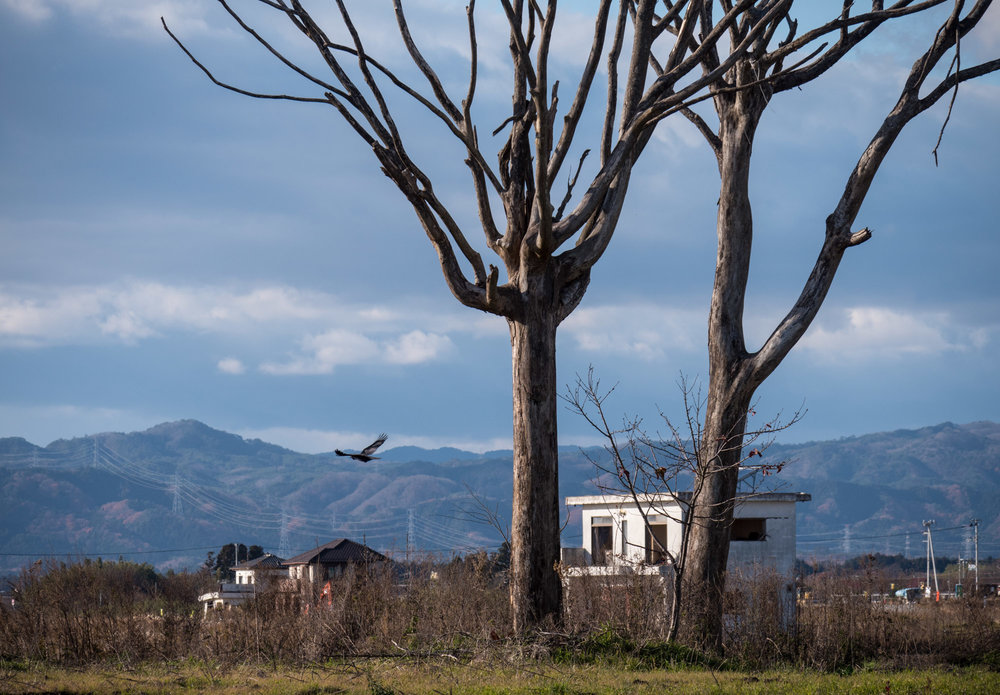 A bird of prey flying over one of the most devastated areas within the exclusion zone. If there were people in this area when the wave hit, they didn't stand a chance.