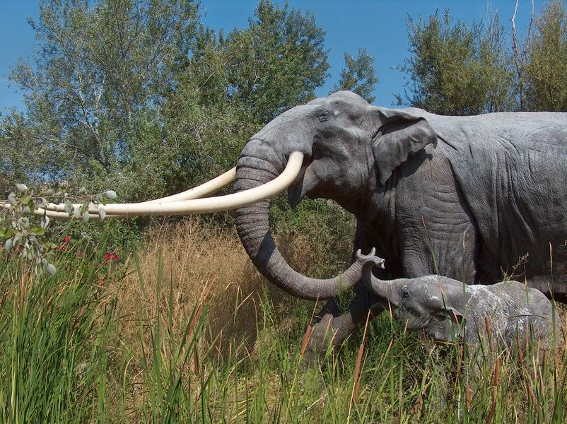 European Forest Elephant from Archaeology News Network