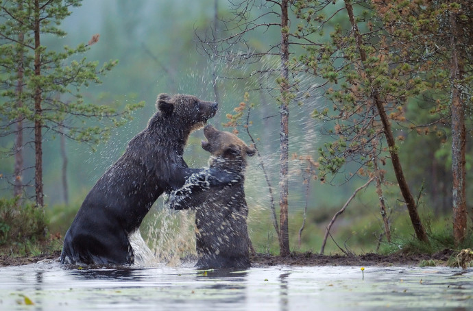 rewildingeurope.com