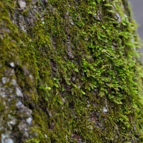 tree-trunk-moss-725x483.jpg