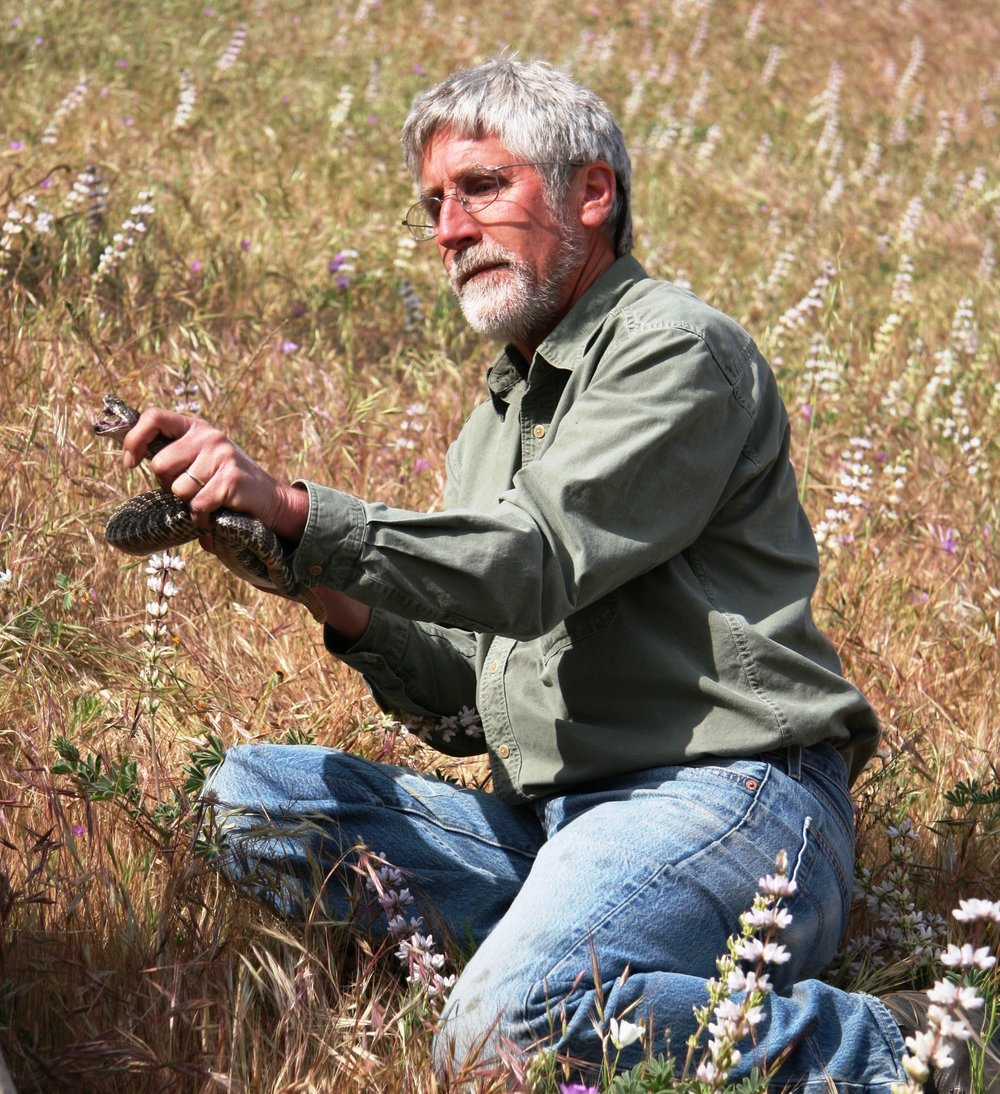 Pete Bloom, raptor biologist, Tejon Ranch