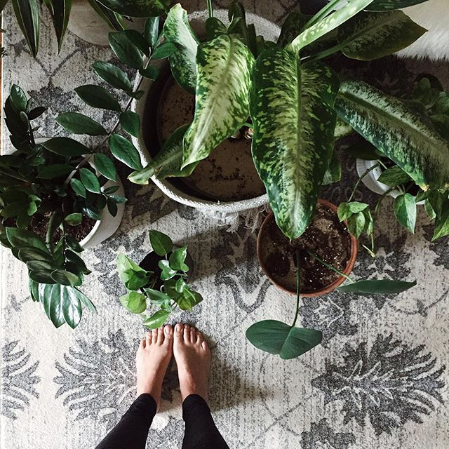 I've adopted them, almost killed them, and saved them... my plant children. Sharing my methods for house plants #blogged 🌿 I'd love to hear your stories/learn about our methods too! -c • • • • • • #TheWeekOnInstagram #feelfreefeed #tellon #plantladiesofig #housework  #note29 #livethelittlethings #myhappyhome #theartoflivingslow #apartmenttherapy #interiorlover #actualinstagramhomes #modernrustic #myhomevibe #makeshiftblog #houseplantcare