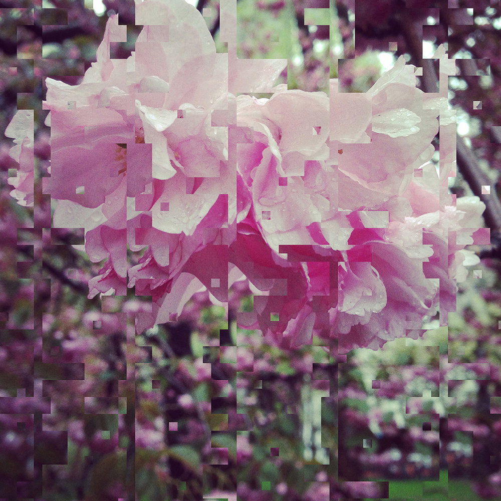 custom design cherry blossom.jpg