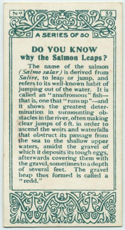 George Arents Collection, The New York Public Library.  Do you know why the salmon leaps?