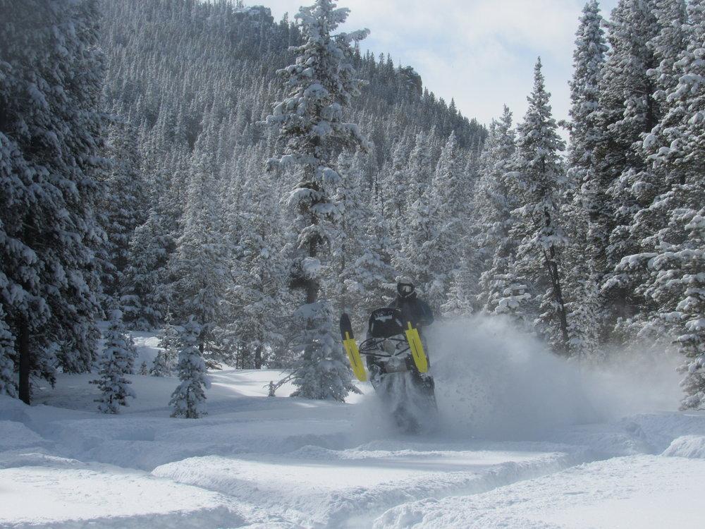 Black Mountain - A Tree Riders Paradise