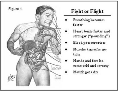 fight or flight.jpg