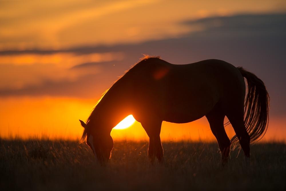 BOJDEN_HORSES-0517.jpg