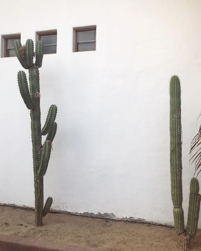 Minimalism in Mexico. Currently taking in the flora and fauna in Zipolite with the wonderful women of @real.retreats. Here to collaborate, play with bananas and remember to breathe.