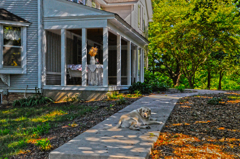House with Dog HDR.jpg