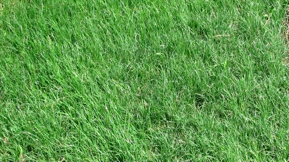 Lawn 30 days.jpeg