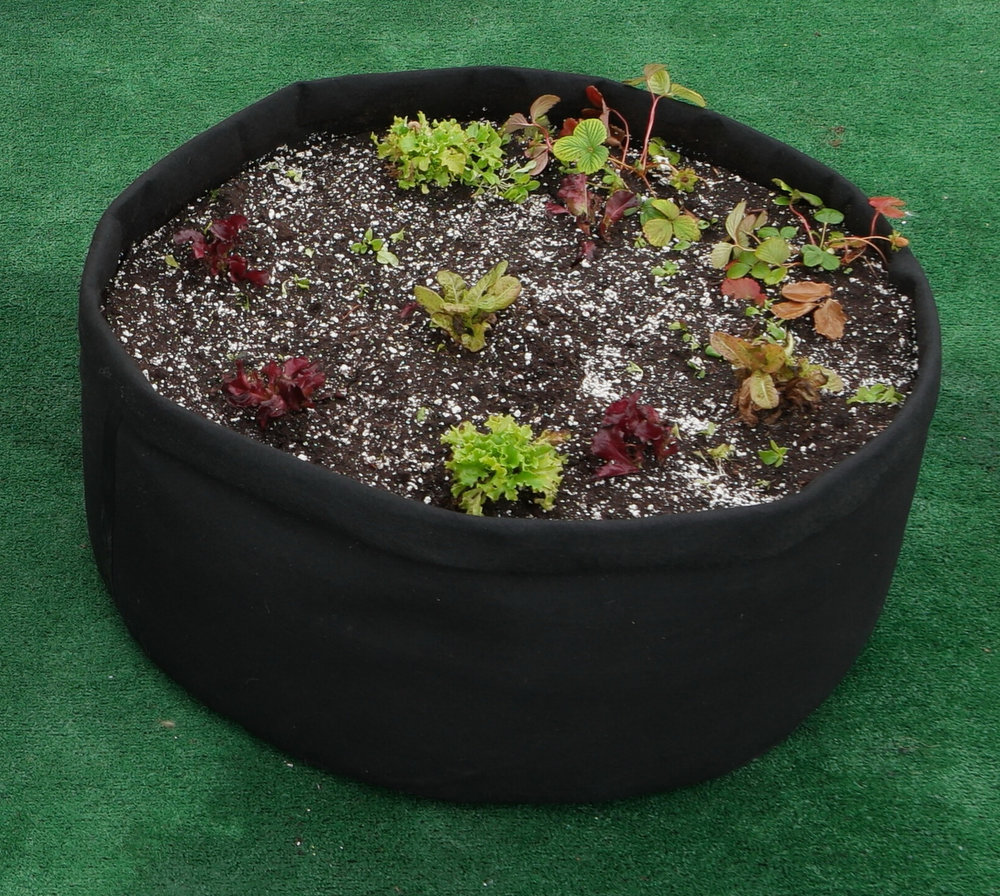 Garden bed setup for multiple lettuce plants