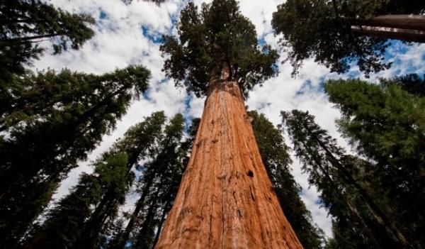Calaveras-Big-Trees-State-Park-13-640x375.jpg