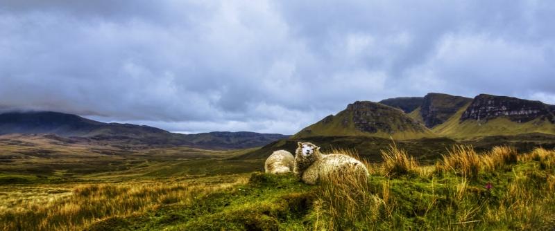 sheep_guarding_quiriang__isle_of_skye__scotland_by_raiden316-d5us886.jpg