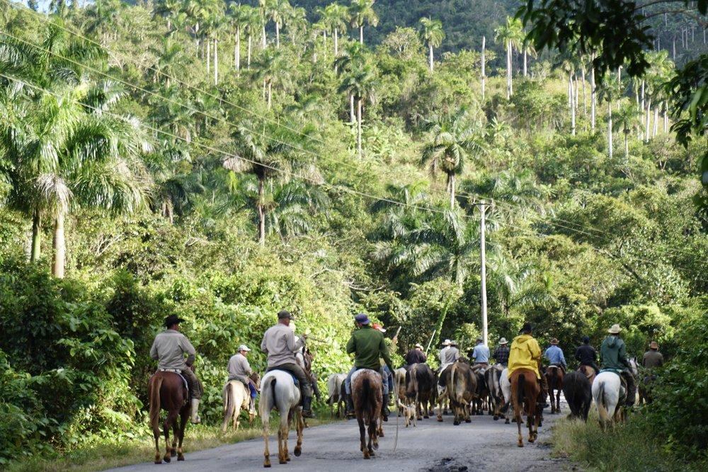 Cuba Cowboys in Sierra del Rosario