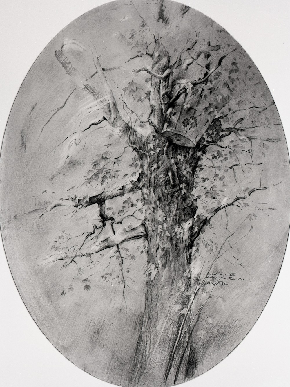 Basket in a Tree - Weekeepeemee River.      1962, pencil on paper. 23.5 x 17.6 inches. Private Collection.